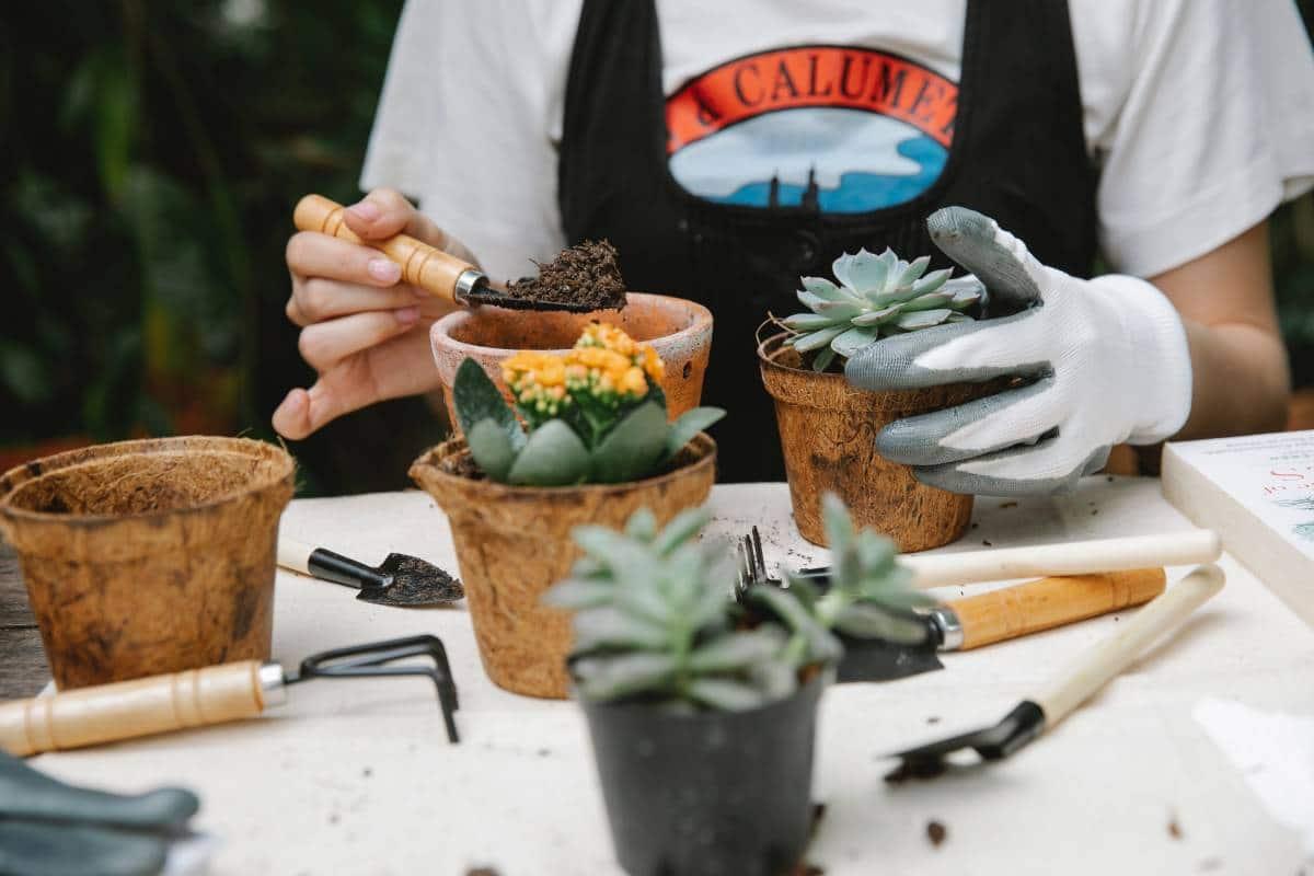 woman putting soil in succulent pot